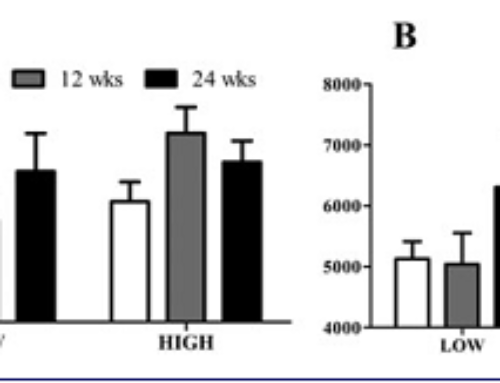Muscle fibre capillarization is a critical factor in muscle fibre hypertrophy during resistance exercise training in older men