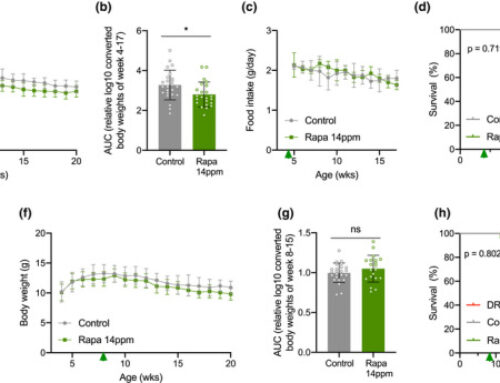 Unlike dietary restriction, rapamycin fails to extend lifespan and reduce transcription stress in progeroid DNA repair-deficient mice